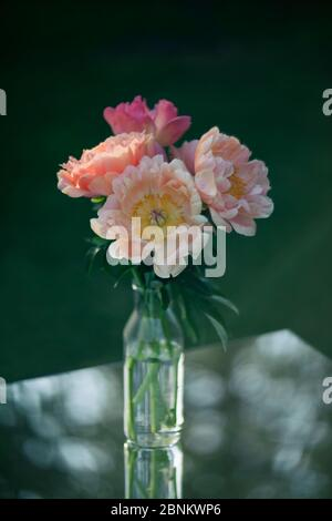 Beautiful pink peonies in a glass vase. Flowers in a vase on a mirror table. Peonies with bokeh.