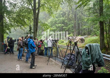 Nature photographers and tourists waiting at the wolf enclosure to photograph wolves in the Tierfreigelande, open-air animal park near Neuschonau in t - Stock Photo