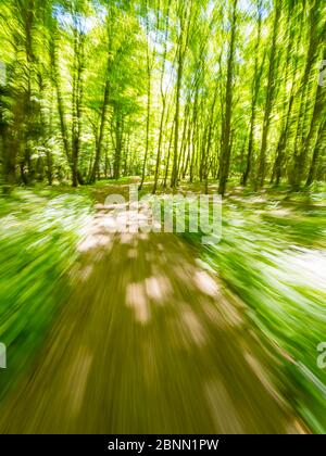 Stunning Spring Green nature color in forest while running simulated sprinter run intentionally blurry trail foottrail Zeleni vir Skrad Croatia Europe - Stock Photo