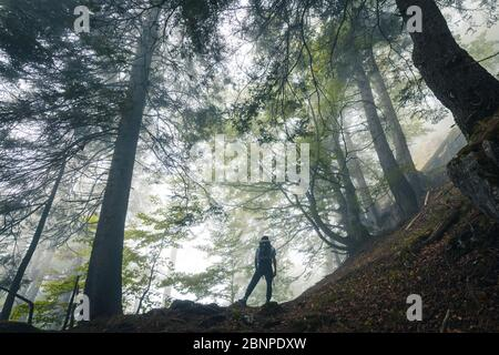 young hiker explores a beech forest on a gloomy day, san lucano valley, taibon agordino, belluno, veneto, italy - Stock Photo