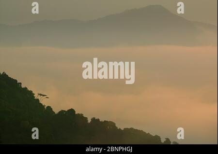 Early morning light and mist in the Darien national park, seen from Cerro Pirre, Darien province, Republic of Panama. - Stock Photo