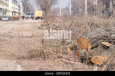 view of dry branches and fallen trees on the sidewalk of a city street against the background of trucks with working staff - Stock Photo