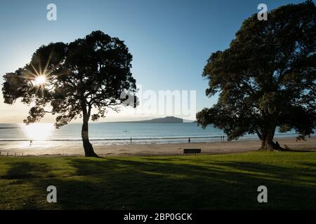 People and dogs walking at Takapuna beach at sunrise. Sun starbursts through Pohutukawa tree with Rangitoto Island in the distance. - Stock Photo