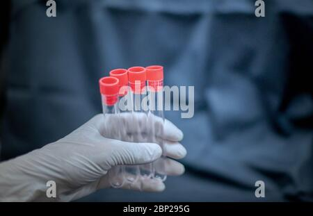 Scientist hand holding test tube and wearing surgical glove preparing to the science experiment in the laboratory room. - Stock Photo