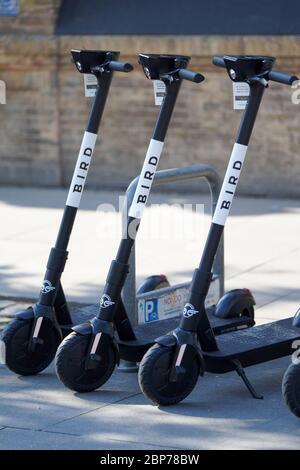 Symbolfotos und Symbolbilder des neuen E-Scooter Anbieters BIRD mit Logo in Deutschland. - Stock Photo
