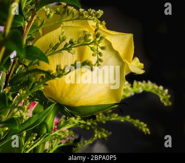 Bright blooming yellow rose in a bouquet of fresh flowers on a black background - Stock Photo