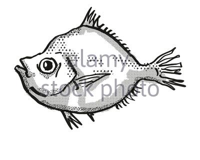 Retro cartoon style drawing of a Malayan Deepsea Boarfish , a native Australian marine life species viewed from side on isolated white background done - Stock Photo