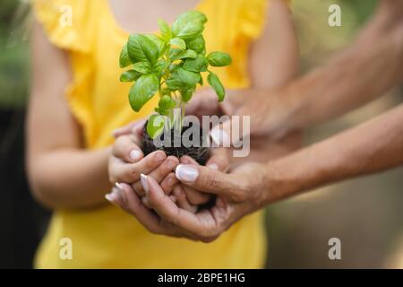 Hands of a Caucasian woman and her daughter holding a seedling in her cupped hands - Stock Photo
