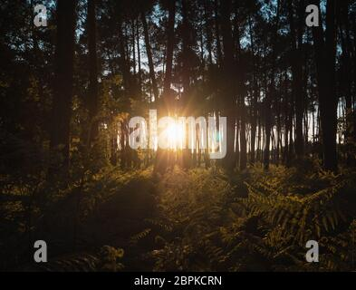 Lovely Sunset behind the Forrest in Landes, France - Stock Photo