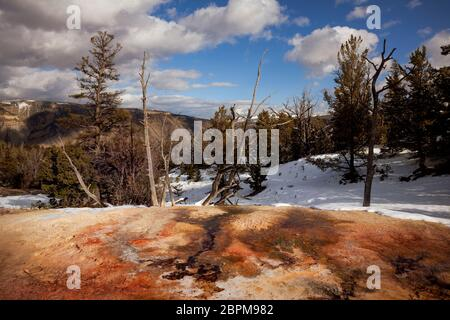 WY04427-00...WYOMING - Colorful hot spring next to White Elephant Back Terrace at Mammoth Hot Springs in Yellowstone National Park. - Stock Photo