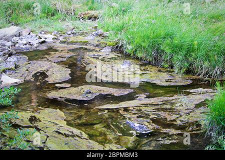 Slime and algaa on stagnant and polluted water. - Stock Photo