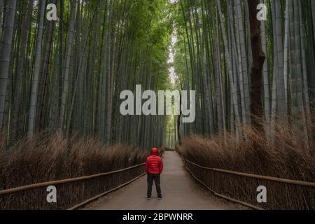 Taken in Arashiyama bamboo forest in Kyoto, Japan.