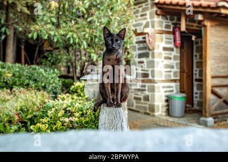Black thin cat sits on a wooden fence on the territory of the monastery of Mount Athos Stock Photo