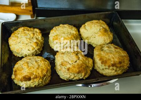 Freshly baked scones just out of the oven.