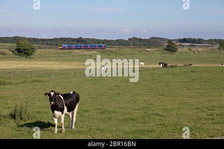 First Transpennine Express Siemens Desiro UK class 185 diesel train 185117 passing the countryside on the Fylde, Lancashire, UK - Stock Photo