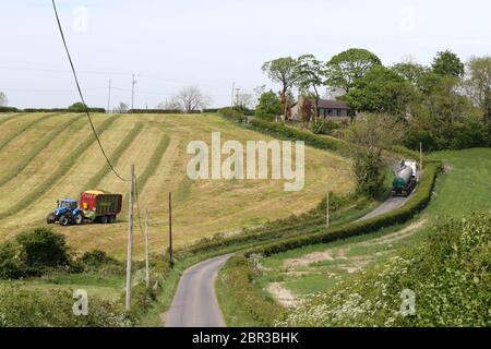 Dromore, County Down, Northern Ireland. 20 May 2020. UK weather - a warm day with sunnny periods and a moderate breeze before strong winds and some rain arrive at the weekend. A tractor gathers silage in a sloping field whilst a milk tanker drives along a naoor country road. Credit: CAZIMB/Alamy Live News. - Stock Photo