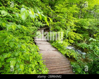 Plitvice lakes intensive vivid Green forest in Spring season in Croatia Europe empty foottrail trail