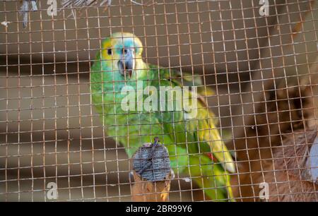 Parrots For Sale At Pet Shop Stock Photo Alamy