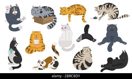 cartoon cat characters collection different cats poses
