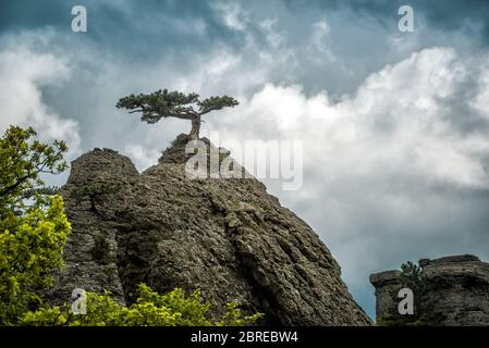 Lonely tree on a rock in the Demerdji mountain. Landscape of Crimea, Russia. - Stock Photo