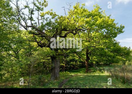 Stanworth Woods. - Stock Photo