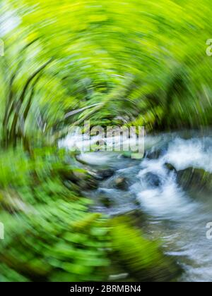 Stunning Spring Green nature color in forest small river Gerovcica nera Gerovo in Croatia Europe creating vertigo intentionally blurry - Stock Photo