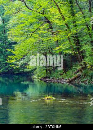 Stunning Spring Green nature color in forest near source of river Kupa in Croatia Europe - Stock Photo