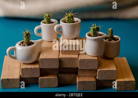 Small home ornamental cactuses in the cute ceramic cups on wooden planks. Composition of mini gardens of prickly succulents on the blue background. Pl