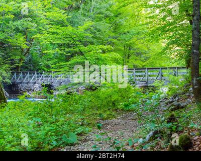 Wooden bridge stunning Spring Green nature color in forest near source of river Kupa in Croatia Europe - Stock Photo