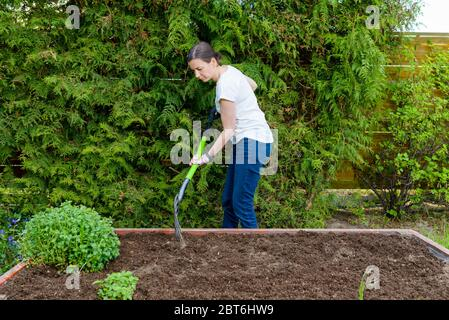 Woman loosening the soil with a pitchfork for growing vegetables and herbs in a wooden crate - a vegetable garden - Stock Photo