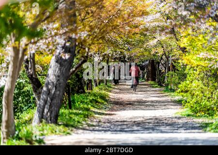 Uji, Japan - April 14, 2019: Trail road path in spring in traditional village with people riding bicycle walking by cherry blossom sakura tree on stre