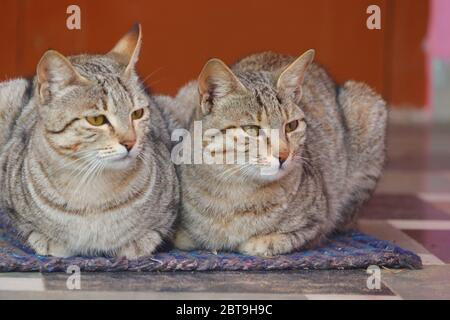 close up of two cats sitting on cloth at home