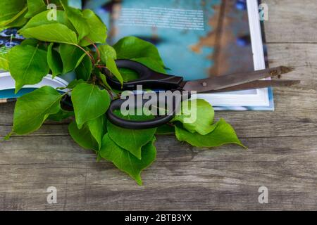 Gardening scissors, book and green branch on rustic background. Gardening time. - Stock Photo