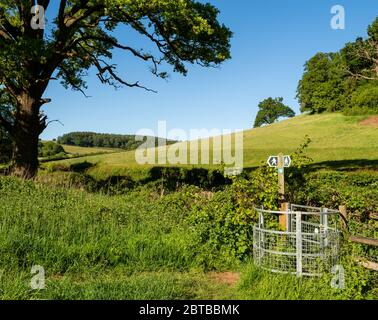 Waymarker on the Gordano Round a circular long distance footpath in North Somerset UK - Stock Photo