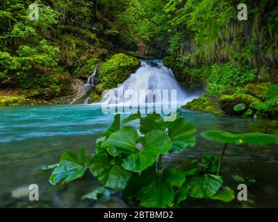Waterfall stunning Spring Green nature color in forest near Zeleni vir near Skrad in Croatia Europe - Stock Photo