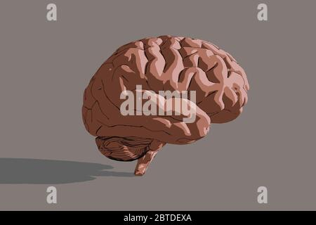 3d illustration of human brain over dark background with  shadow. - Stock Photo