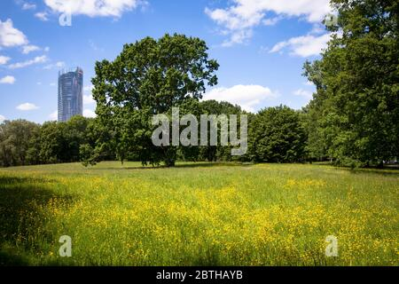 view from the Rhine floodplain to the Post Tower, headquarters of the logistics company Deutsche Post DHL Group, Bonn, North Rhine-Westphalia, Germany