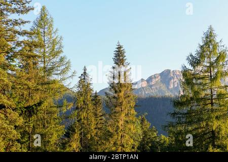 Mountains and beautiful woodland is a Tatra landscape that can be seen from the city of Zakopane in Poland. - Stock Photo