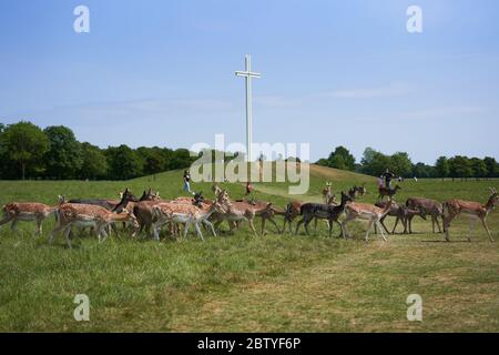 Deer walking near the Papal Cross in Phoenix Park, Dublin city, Ireland. - Stock Photo