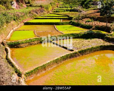 Impressive rice paddy fields in the highlands of Madagascar