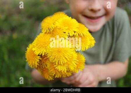 A sweet little boy child is holding up a large bouquet of yellow dandelion flowers for his mother. - Stock Photo