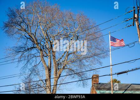 American flag and a tree on a blue sky, Maine USA