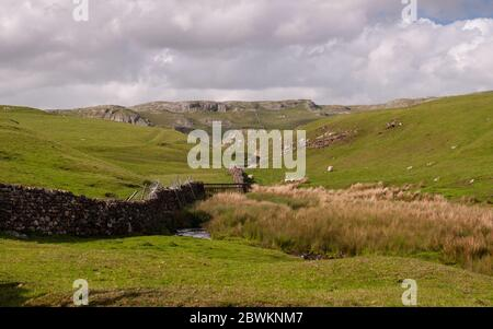 Sheep graze on moorland pastures beside the Scaleber Beck stream under the limestone karst hills of Langcliffe Scar above Settle in England's Yorkshir - Stock Photo