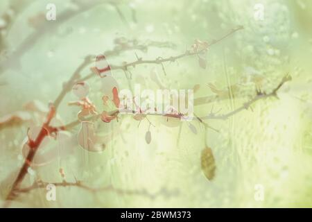 Blurred floral background, double exposure, branch with bright autumn leaves and berries, raindrops. Concept of seasons, autumn