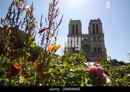 Paris, June 2. 15th Apr, 2019. Flowers are seen in front of the Notre-Dame Cathedral in Paris, France, June 2, 2020. The Parvis Notre-Dame was reopened to the public from May 31 after more than one year's close because of the huge fire on April 15, 2019. Credit: Gao Jing/Xinhua/Alamy Live News - Stock Photo
