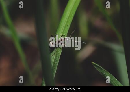 Close up view with ant that crawling on grass