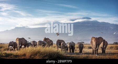 Large family herd of African elephants walking in front of Mount Kilimanjaro in Amboseli, Kenya Africa