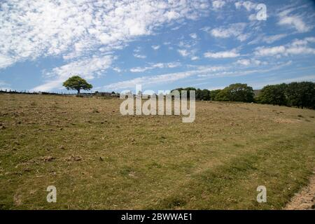 Distant sheep grazing on sparse grass on the slopes of the Pennine foothills in West Yorkshire in summer - Stock Photo