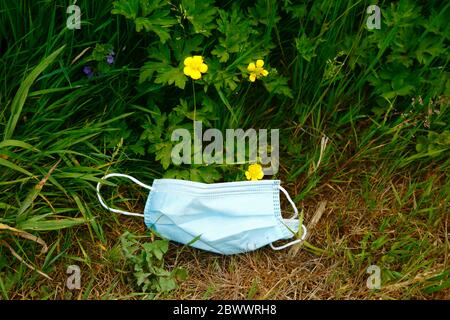 2nd June 2020, near Tonbridge, Kent, UK: Discarded face mask in wildflowers next to hedgerow alongside a country lane, likely thrown from a passing vehicle or cyclist. The yellow flowers are creeping buttercup (Ranunculus repens) - Stock Photo