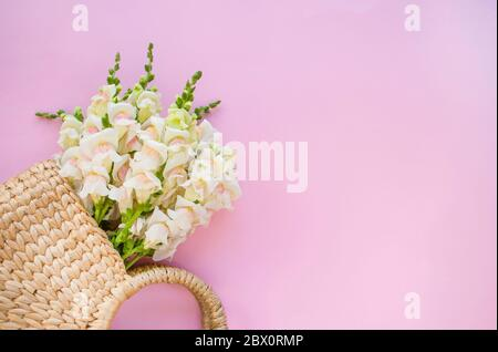 Modern straw bag with beautiful bouquet of white flowers on pink background with copyspace.